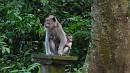 Szabadon élõ majmok az erdõ szélén nézelõdnek.
