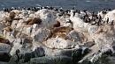 Békésen sütkérezõ fókák a Beagle-csatorna egyik szigetén.