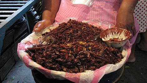 Chapulines, Oaxaca egyik gasztronómiai specialitása - nézze meg nagyban is!