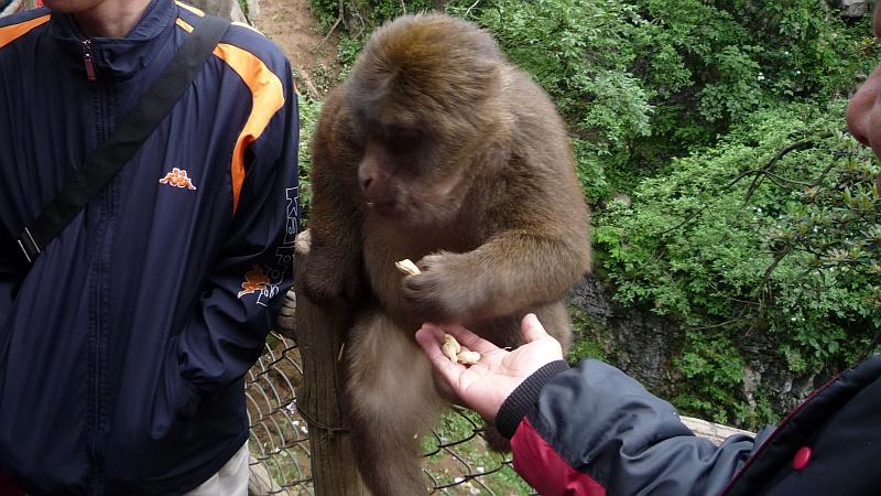 Számtalan tábla kéri, hogy ne etesd a majmot.