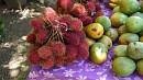 A bordó gyümölcs neve rambután, avagy hamis licsi.