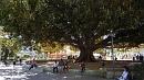 Érzékelik a fa méretét?